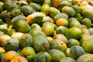 Ratnagiri Mangoes